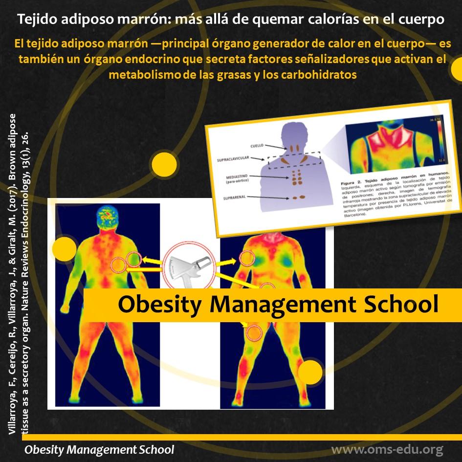 La imagen térmica es una alternativa no invasiva para la medición de la actividad del tejido adiposo pardo en seres humanos.
