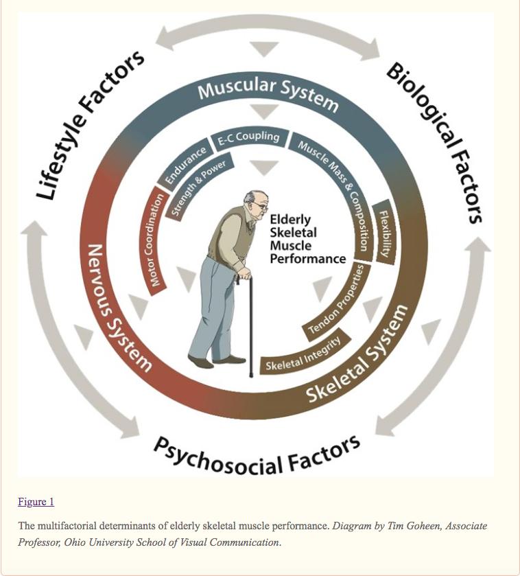 Envejecimiento muscular, calidad y expectativa de vida. Cuando lo que importa no es la persona sino su enfermedad. Falsas prioridades...
