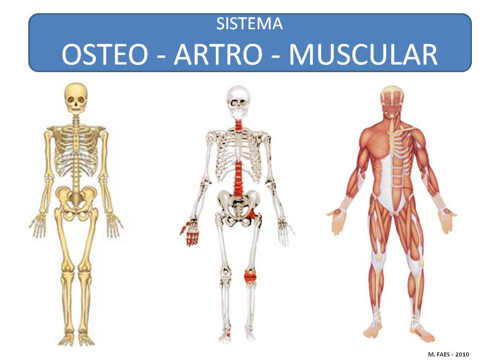 01 - Introducción a la Anatomía