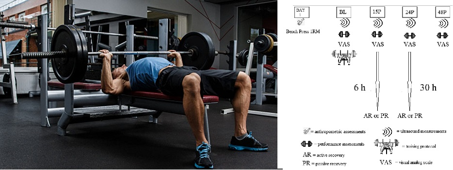 El ejercicio de fuerza de la parte superior del cuerpo reduce el tiempo de recuperación después de un protocolo de press de banco de alto volumen en hombres entrenados en fuerza