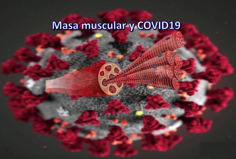 De organoquinas, proteínas, músculo y COVID19. Una mirada al después para comprender lo que debería ser quizás el antes