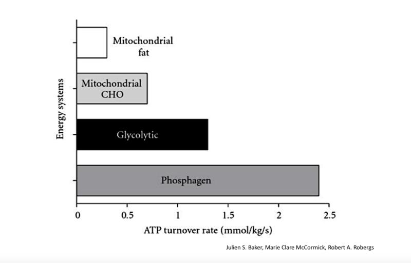 Acople glucolítico (Parte 1).  Ni el sistema fosfágeno se extiende lo que crees ni la glucólisis se posterga en su inicio.