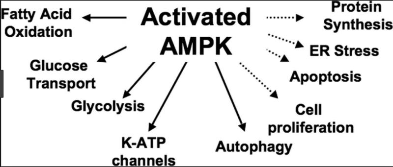 AMPK e intensidad del ejercicio