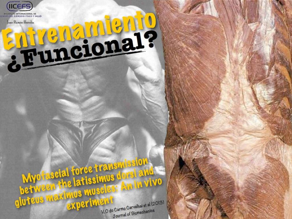 La Fascia Toraco-Lumbar: descripción y rol en la estabilización del core