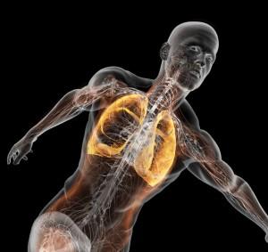Efectos del entrenamiento de la musculatura respiratoria sobre el rendimiento.  Revisión bibliográfica