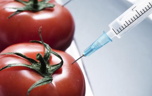 Efecto a Largo Plazo del Consumo de Alimentos Modificados Genéticamente