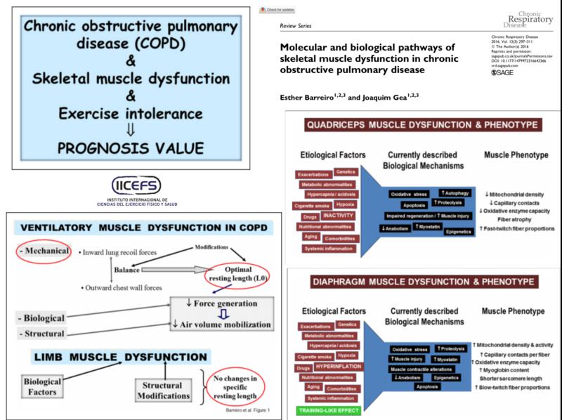 Vías Moleculares y Biológicas de la Disfunción Muscular en la EPOC