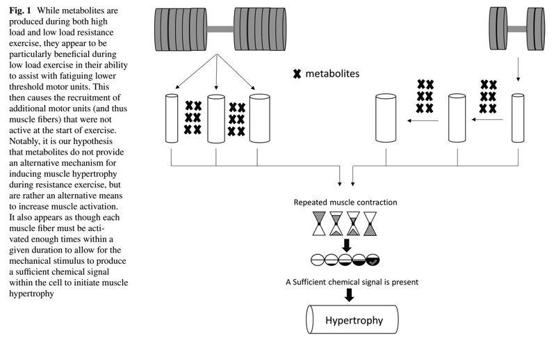 Los metabolitos que se producen durante el ejercicio de fuerza, mejoran la hipertrofia muscular? Pueden inducir una hipertrofia muscular a través de un mecanismo alternativo?