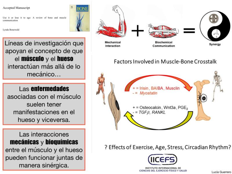 Envejecimiento asociado a la Osteoporosis y Sarcopenia