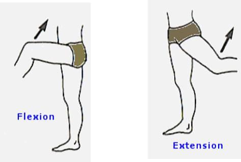 flexion+de+articulaciones