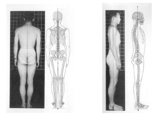 Imagen 1. Correcta posición anatómica para evaluar el plano frontal y sagital