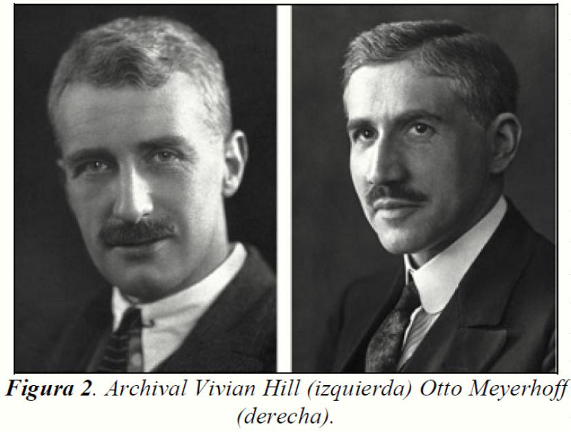 Hill y Mayerhoff
