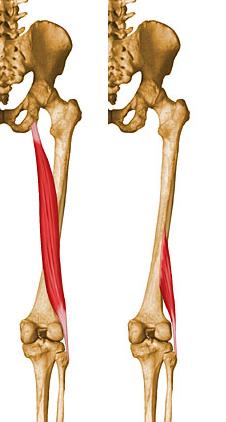 BicepsFemoral